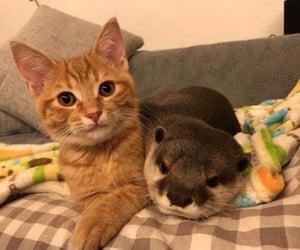 :(, animals, and cat image
