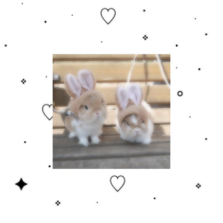 beige, bun, and bunnies image