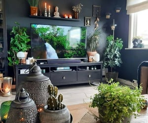 cactus, dishes, and home image