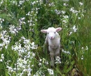 animal, flowers, and lamb image