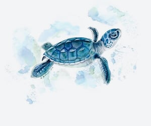 art, drawing, and sea turtle image