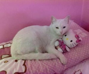 cat, pink, and hello kitty image