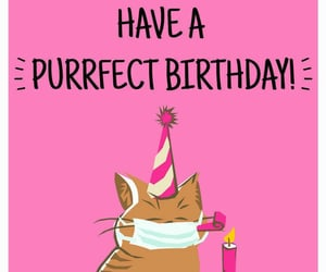 cats, happy birthday, and virus image