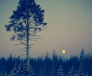 tree, forest, and moon image