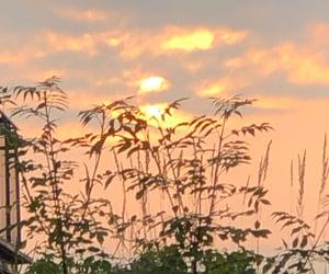 nature, sonnenlicht, and licht image