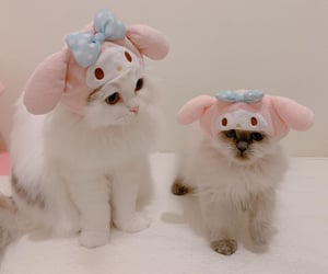 cat, kitten, and my melody image
