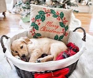 dog, merry christmas, and puppy image