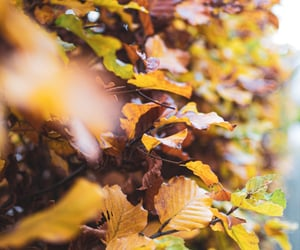 autumn, Herbst, and nature image