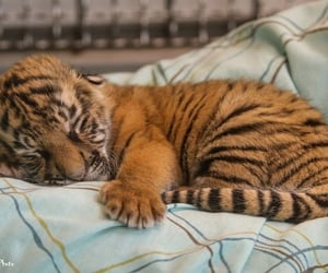 baby, dormir, and animaux image