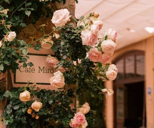 cafe, flowers, and rose image