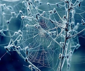 cobwebs, fall, and spider webs image