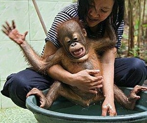 adorable, funny, and orangutan image