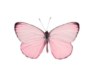 butterfly, pink, and overlay image