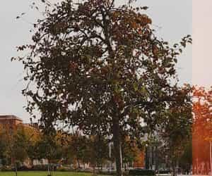 arbol, plantas, and tree image