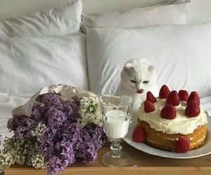 Algeria, meriem tm, and cake image