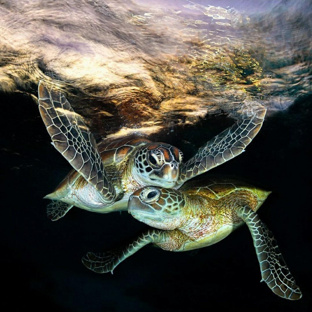 Animales, naturaleza, and tortugas image