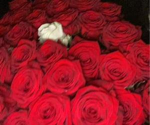couple, red roses, and Relationship image