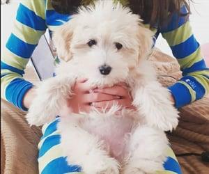 dog, puppy, and mascota image