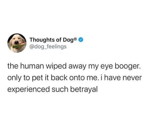 eye boogers and such betrayal image