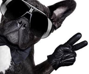 animal, black, and glasses image