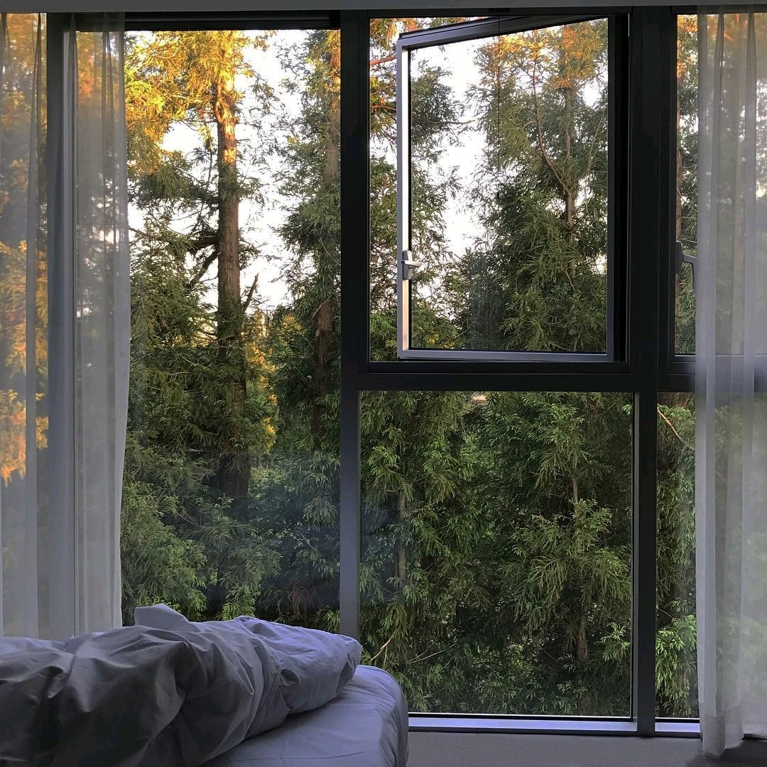 window, forest, and green image