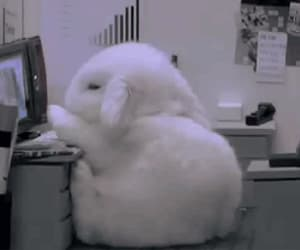 animals, bunny, and gif image