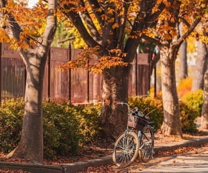 autumn, bycicle, and colorful image