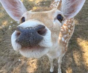 animal, aesthetic, and deer image