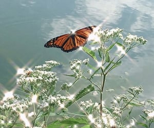 butterfly, sparkle, and aesthetic image