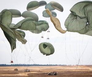 california, fern, and parachute image