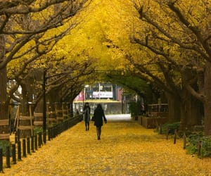 japan, autumn, and instagram image