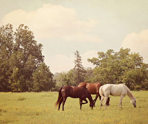 horse, animal, and grazing image