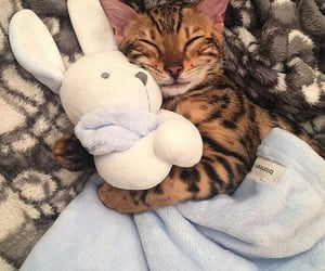 blanket, cat, and bunny image