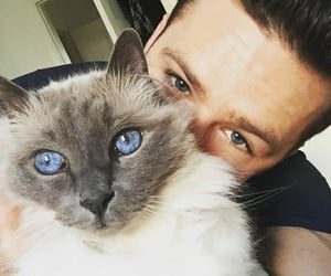 beautiful, cat, and handsome image