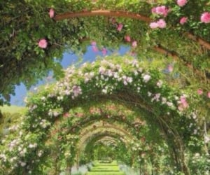 archways, flowers, and green image