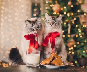 christmas, animals, and cats image