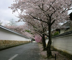 japan, cherry blossom, and japanese image
