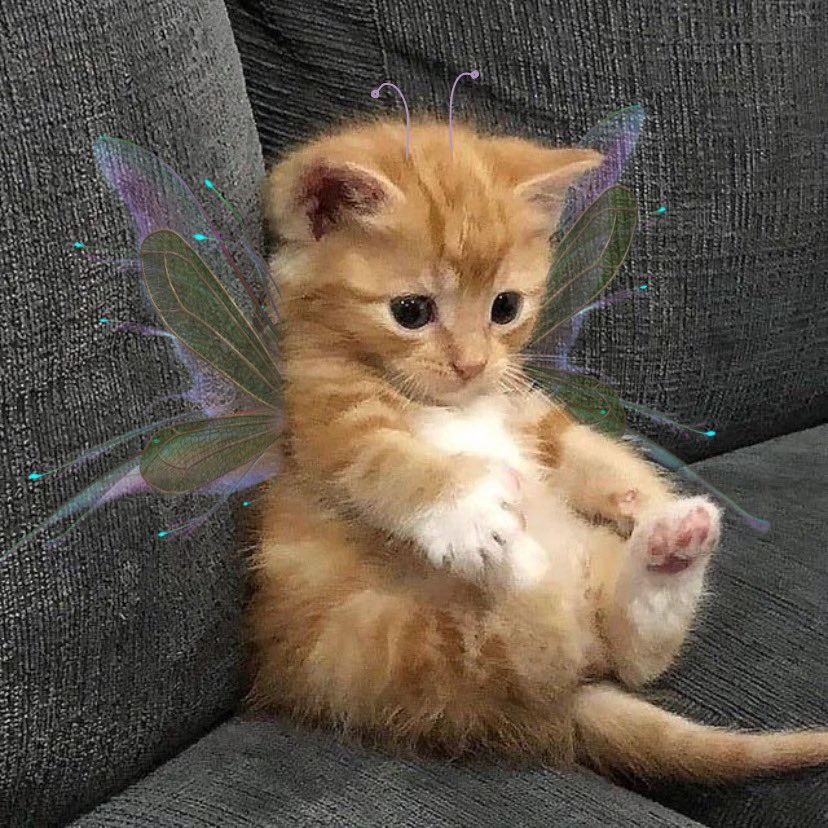 cat, fairy, and cute image