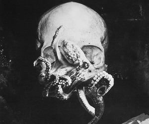 octopus, skull, and black and white image