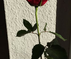 inspiration, rose, and shadow image