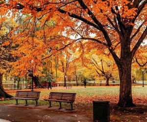 aesthetic, autumn, and nature image