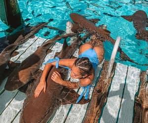 bikini, girls, and sharks image
