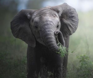 Animales, elefante, and naturaleza image