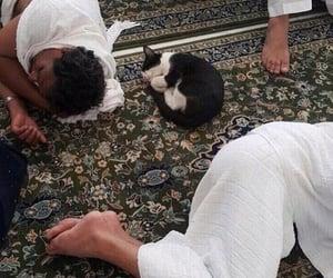 cat and islam image