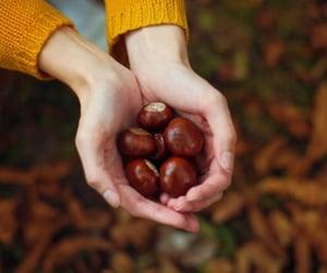 season, autumn, and fall image