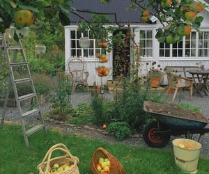 fruit, garden, and nature image