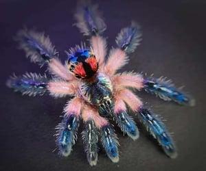 naturaleza, tarantula, and Animales image