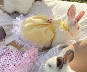 aesthetic, bunny, and rabbit image