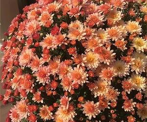 Best Flower Garden Tips