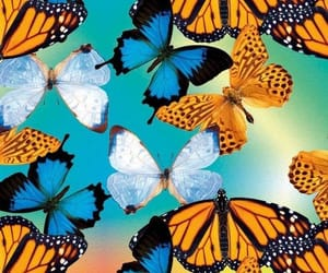 azul, butterfly, and mariposas image
